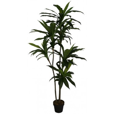 POTTED FAUX DRACAENA LEMON LIME TREE